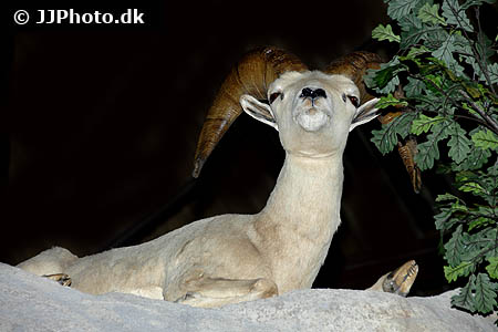 Corydoras species cw107 5