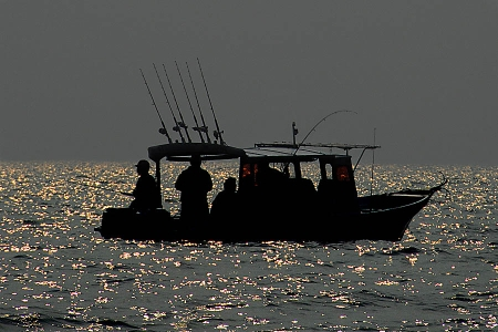 Corydoras species cw058 7