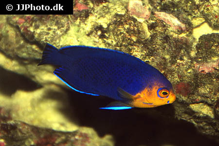Corydoras species c123 5