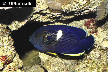 Corydoras species cw018 1