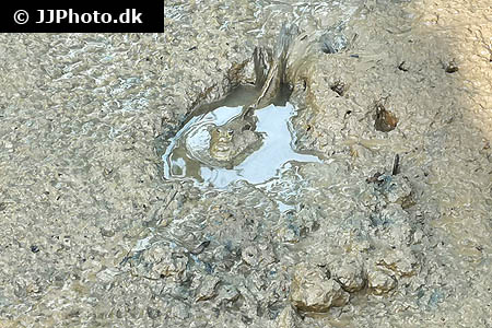 Corydoras species c090 1