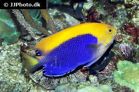 Corydoras species c123 4