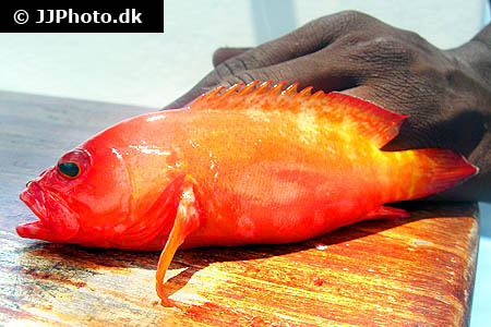 Corydoras species cw022 3
