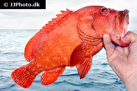 Corydoras species cw030 1